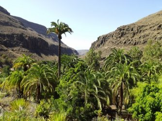 Gran Canaria ako narodeninový darček