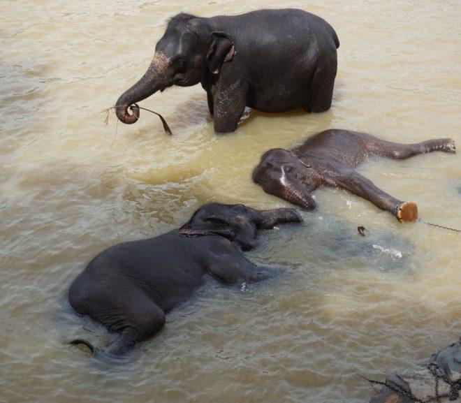 Svadobná cesta – Srí Lanka