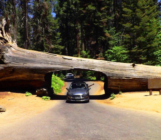 Národný park Sequoia – domov obrovských stromov